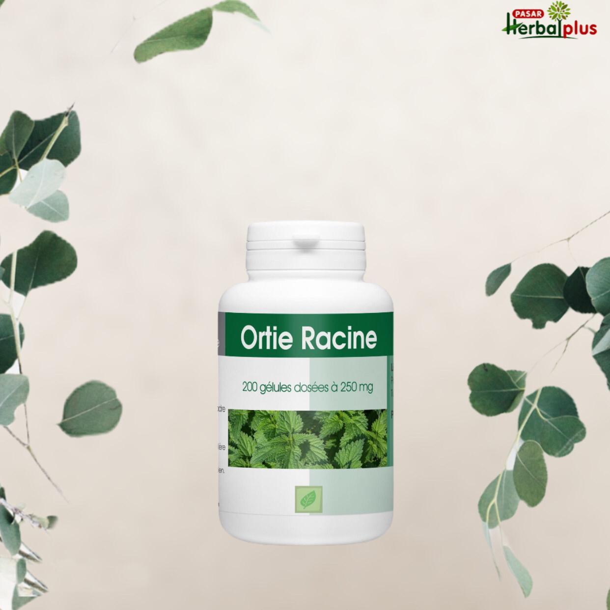 نبات القراص Ortie Racine